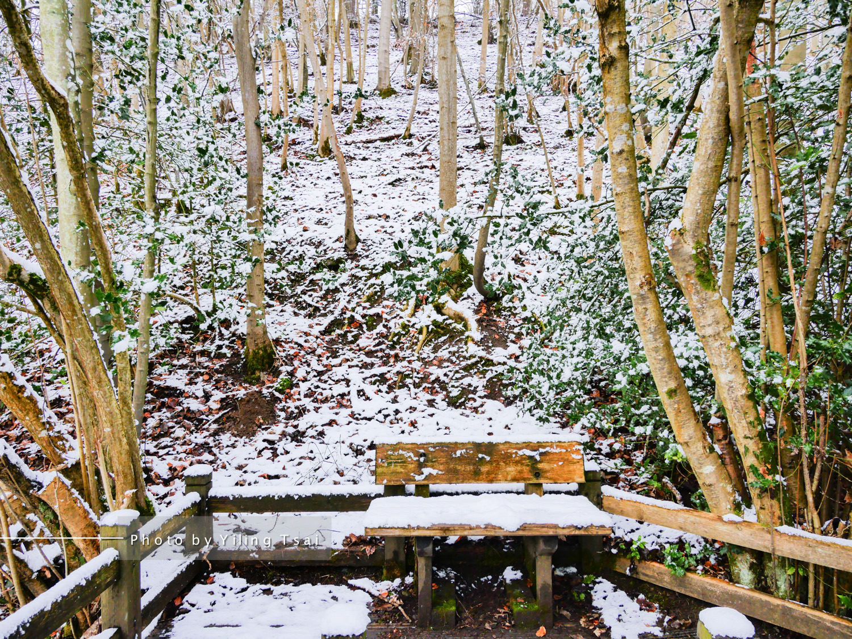 英國約克 約克郡谷地國家公園一日遊