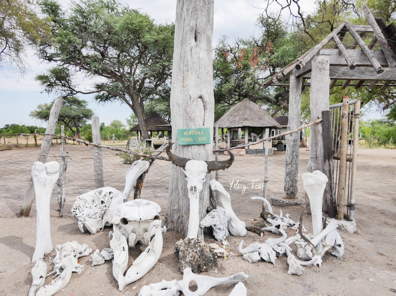 辛巴威景點 萬基國家公園 非洲獵遊初體驗 動物大集合