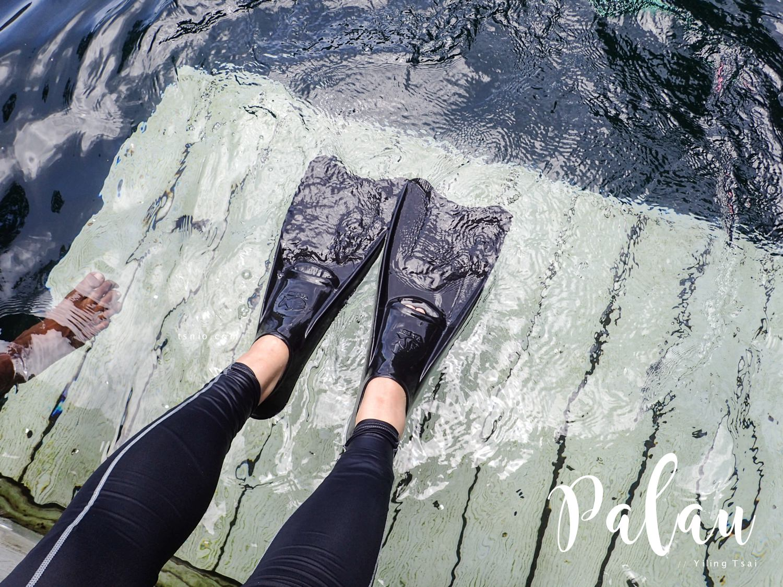 帛琉景點 水母湖 在夢幻水母天堂中浮潛