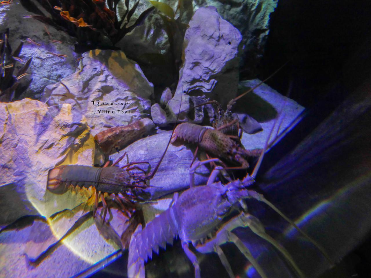 澳洲雪梨景點 SEA LIFE Sydney Aquarium 雪梨水族館