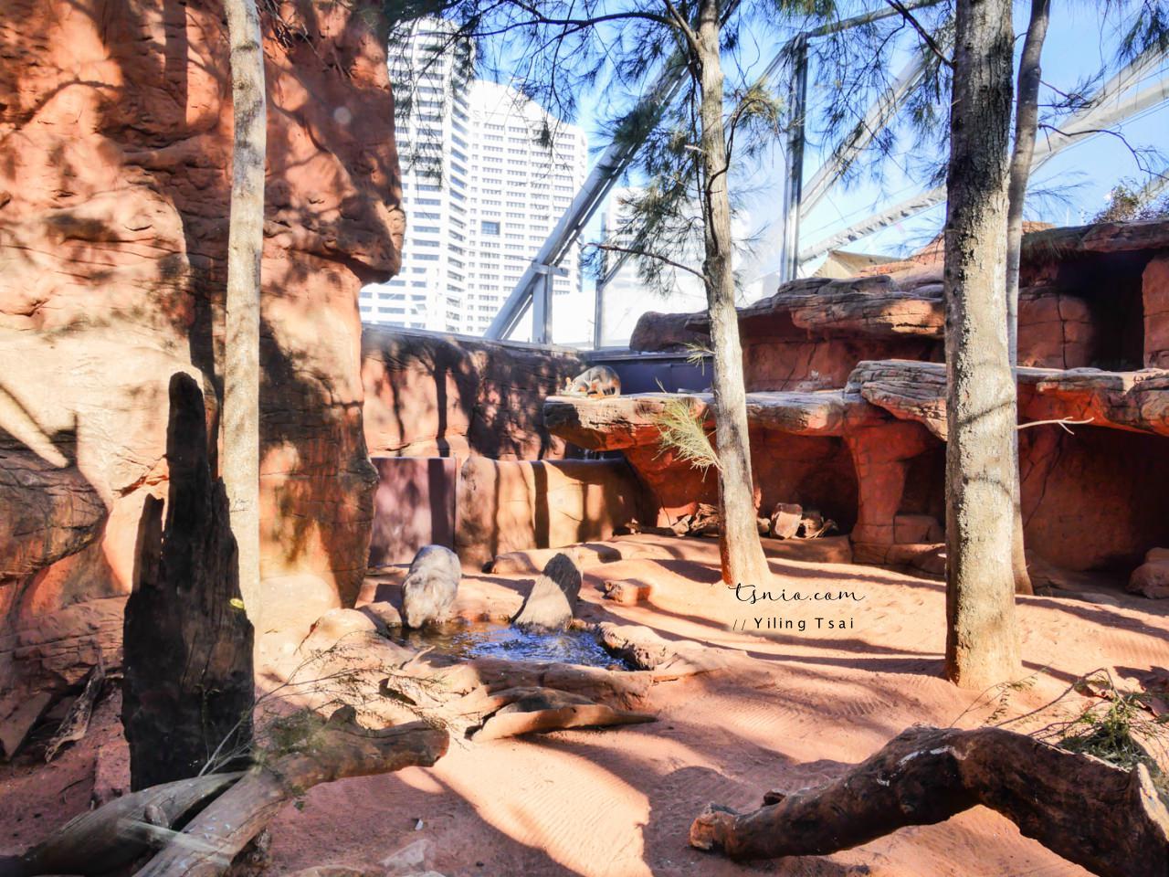 澳洲雪梨景點 WILD LIFE Sydney Zoo 雪梨野生動物園